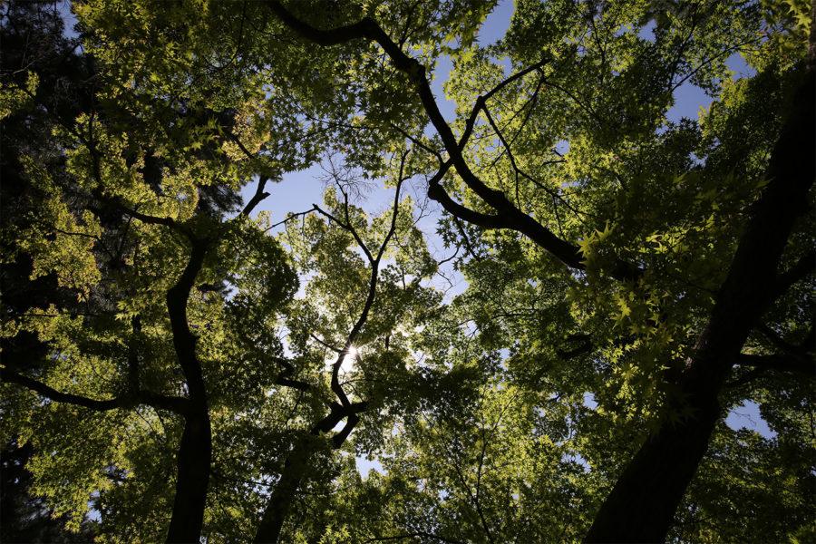 自然攝影,植物攝影